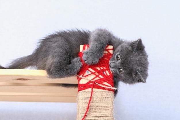 小さな灰色の子猫がロープで作られた自家製の引っかき棒を登り、ラックが爪の引っかき傷を研ぎます