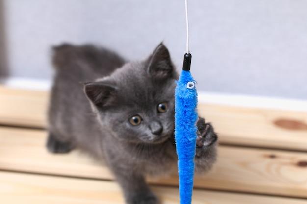 작은 회색 고양이는 낚싯대 고양이 장난감에 장난감을 가지고 노는