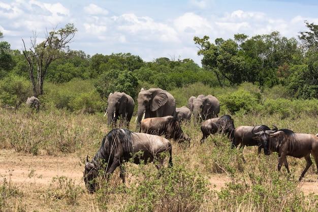 サバンナの草食動物の小さなグループ。マサイマラ、ケニア