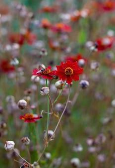Маленькое трудолюбивое насекомое. оранжевый сад декоративные домашние цветы. маленькие оранжевые цветы