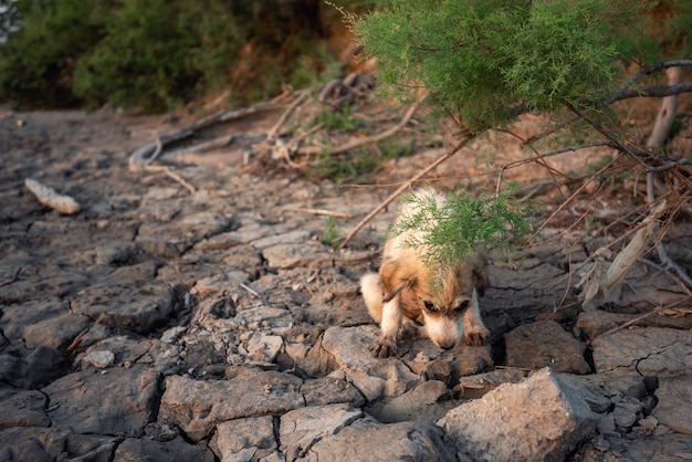 강둑에 작은 노숙자 강아지