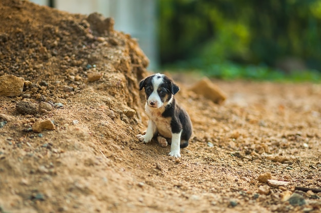 小さなホームレスの子犬