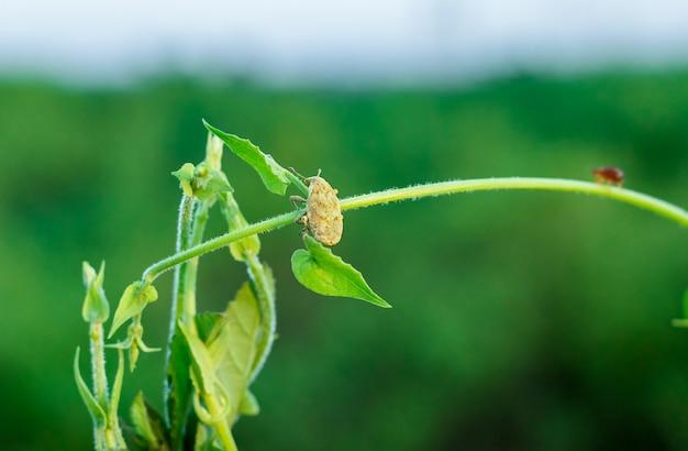 야생 가지를 들고 있는 작은 곤충은 선택적인 초점으로 가까이에서 볼 수 있습니다