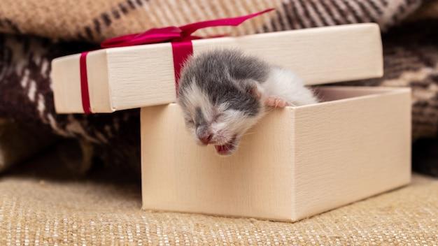 작은 새끼 고양이가 선물 상자에서 올라옵니다.