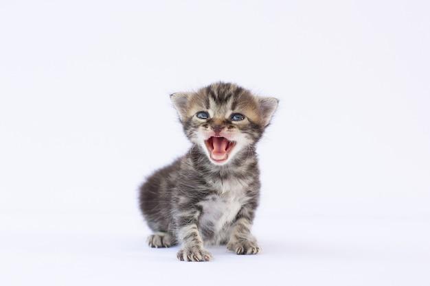 泣いて白い表面を見上げている小さな子猫