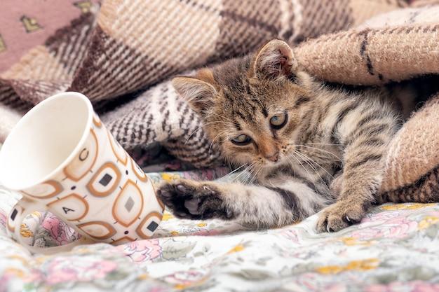 毛布の下のベッドにいる小さな子猫がマグカップを投げました