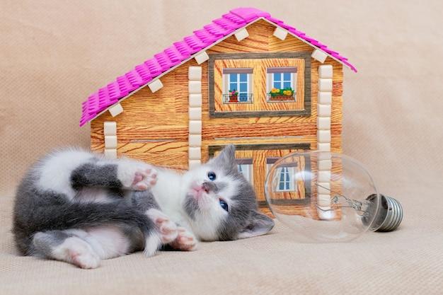 小さな子猫がおもちゃの家と電球の近くで遊んでいます
