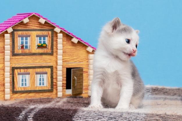 小さな子猫がおもちゃの家の近くで遊んでいます。