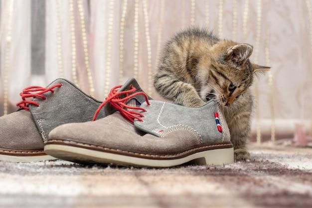 Маленький котенок играет с туфлями. маленькая кошка кусает ботинок