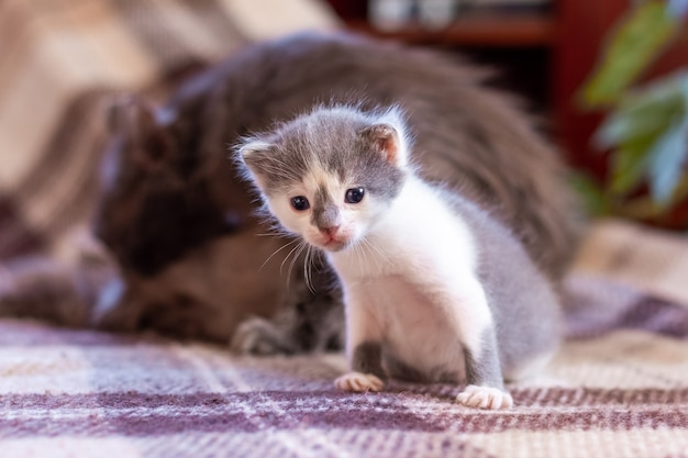小さな子猫が母猫の隣の部屋に座っています