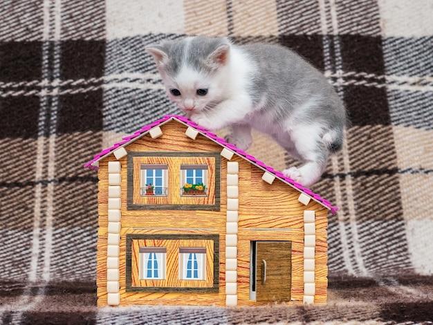 小さな子猫がおもちゃの家に座っています