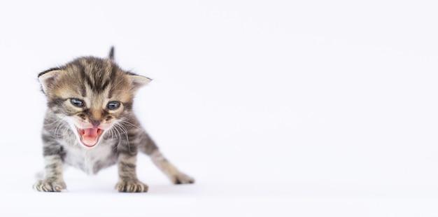 小さな子猫が白い表面に立って泣き出します