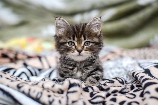 Маленький котенок лежит на кровати