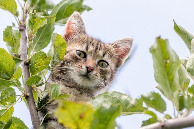 Маленький котенок на дереве выглядывает из-за листьев