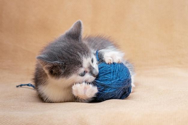 파란색 실 망치로 노는 작은 새끼 고양이