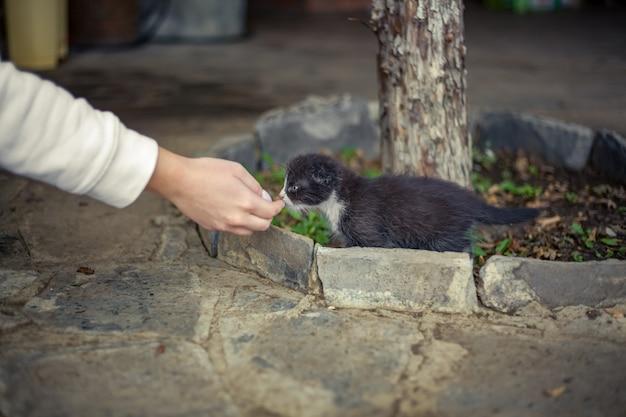 남자의 손을 잡는 작은 고양이