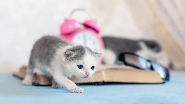 小さな子猫が開いた本、目覚まし時計、眼鏡の近くを歩きます。図書館を訪問する