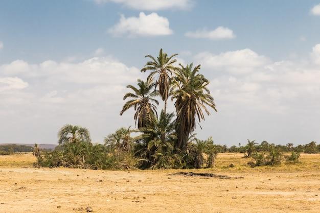 Небольшой оазис в саванне амбосели кения
