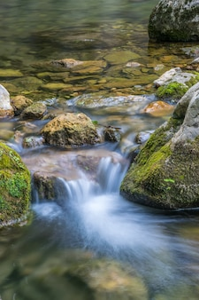숲속의 돌들 사이로 그림 같은 작은 강이 흐릅니다.