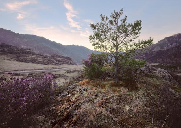 Маленькая сосна на камне, покрытом мхом и цветным лишайником горная долина