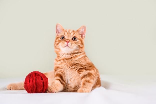 Маленький рыжий котенок на светлой кровати лежит с нитками.