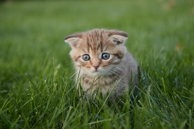緑豊かな草の中の小さな赤い子猫が座ってカメラを見て草の中で遊んでいます