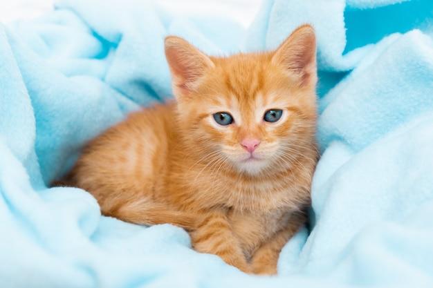 Маленький рыжий полосатый котенок удобно лежит в синем одеяле и смотрит в камеру