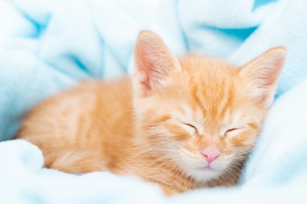 Маленький рыжий полосатый котенок спит в синем одеяле концепция заботы о домашних животных