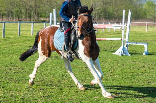 小さなライダーが競馬場の緑の芝生で馬を訓練します