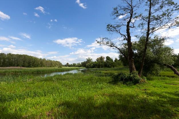 森の中と牧草地の近くの小さな川