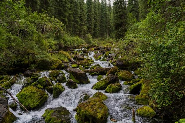 Маленькая речка в лесу летом