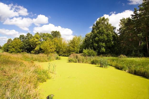 夏の小さな川。ベラルーシ