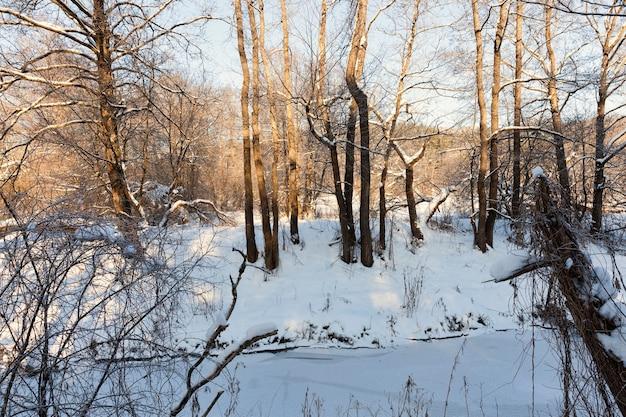 Небольшая река, вода в которой замерзает зимой, замерзшая река в зимние морозы, снег и мороз зимой на природе у реки или озера