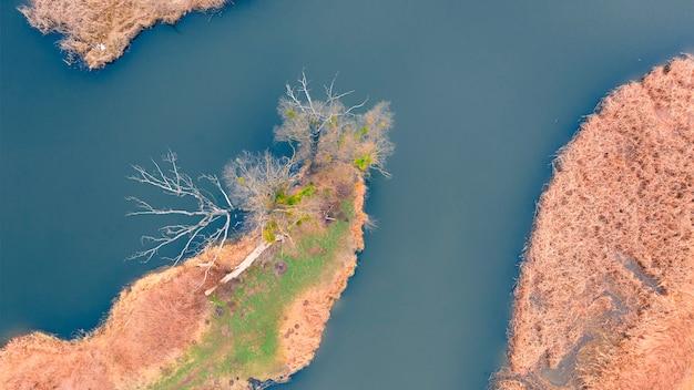 Маленькая речка с веткой, с чистой водой. на берегу водохранилища сухие камыши. осенний пейзаж в сельской местности.