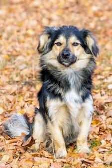 小さな毛むくじゃらの犬が秋の庭の落ち葉に座っています