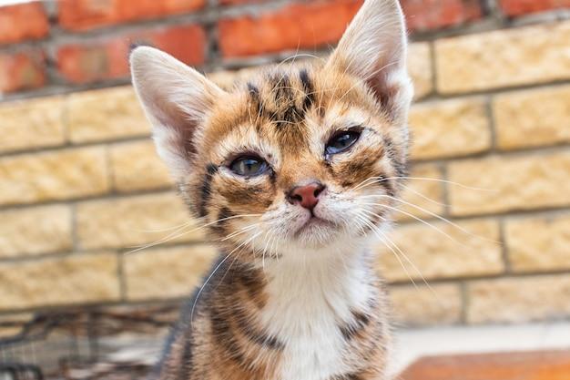 Маленький больной котенок сидит на дороге. маленький бездомный котенок голодает и болеет, брошенный один на улице.