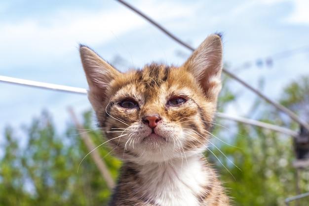 길에 앉아 있는 작은 아픈 고양이. 노숙자 새끼 고양이가 굶주리고 아파서 거리에 홀로 버려져 있습니다.