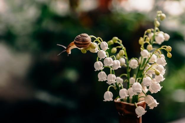 Маленькая улитка ползет по тонкому стеблю ландыша, цветущего белыми цветами, расположенного в букете
