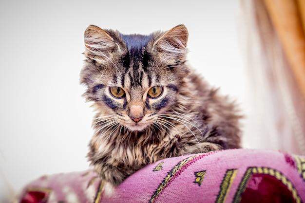Маленький полосатый спокойный кот сидит в комнате