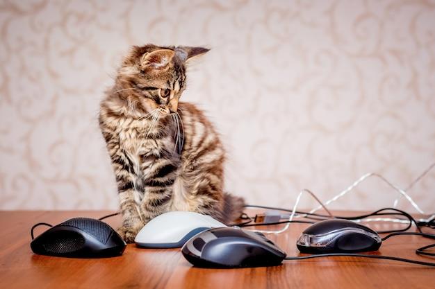 Маленький полосатый кот смотрит на компьютерных мышей
