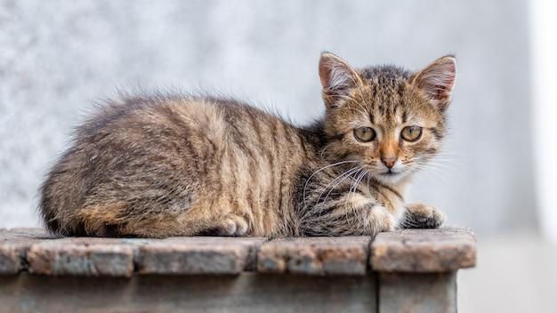작은 줄무늬 귀여운 고양이가 나무 의자에 누워 있다
