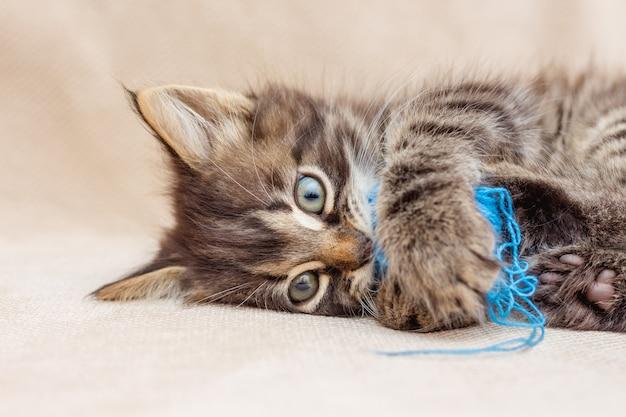 작은 줄무늬 고양이는 파란 실의 공을 가지고 노는