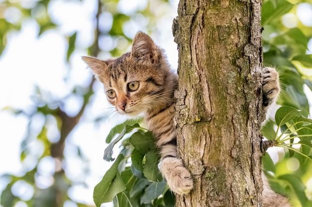木の上の小さな縞模様の子猫は、その足を茎で保持し、注意深く見下ろします