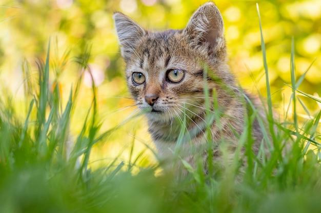 小さな縞模様の子猫が厚い草の茂みの中で庭に座っています
