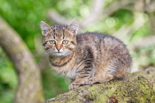 Маленький полосатый котенок сидит на ветке дерева