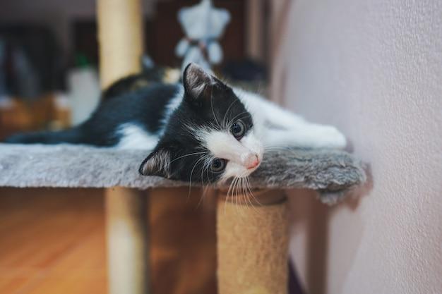 Маленький тайский котенок лежит на диване и яркими глазами смотрит в камеру.