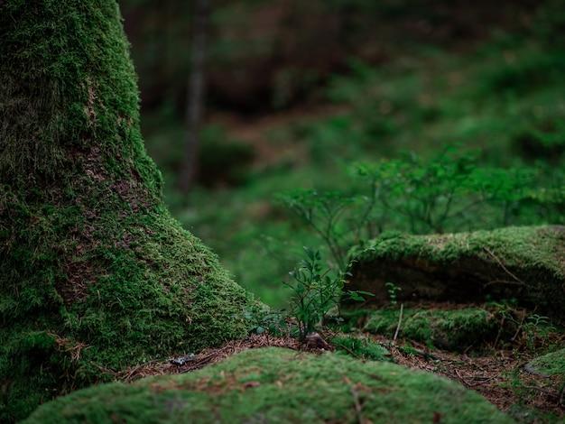 大きな木と石の隣に小さな木が生え、苔が生い茂っています