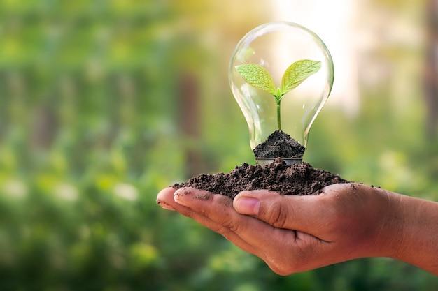 若い女性の手にある省エネ電球に植えられた小さな木、省エネ、再生可能エネルギー、そして環境にやさしいというコンセプト。