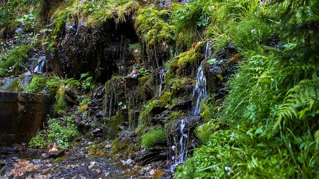 小さな滝がクローズアップ