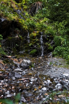 岩の眺めからの小さな滝